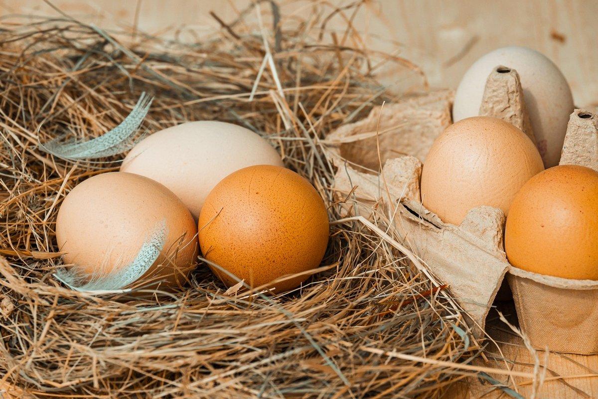 Каква е разликата между яйцата – да белите и кафевите био, еко, клетъчно отглеждане  и пр.