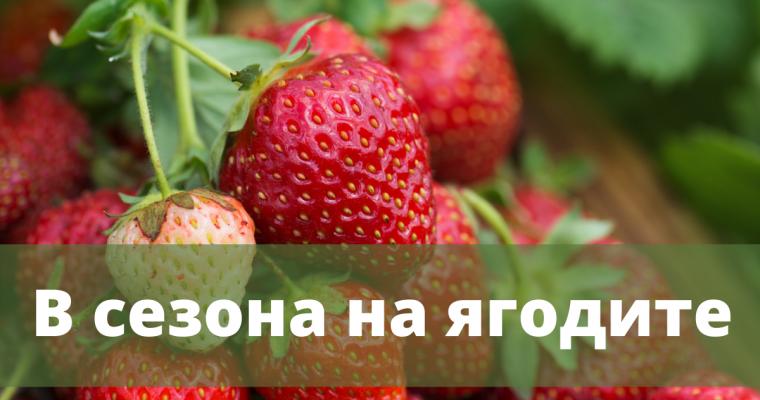 В сезона на: ягодите