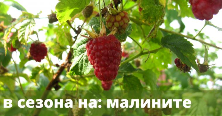 В сезона на: малините